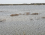 Nature reserve, Rye Harbour